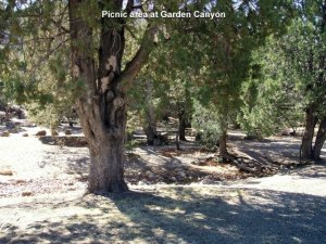 Fort Huachuca Remote Camping