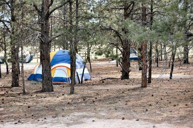 Location & U.S. Military Campgrounds and RV Parks - Peregrine Pines FamCamp